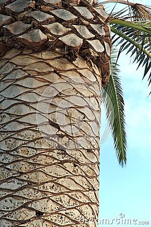Green Palms in Perth, Australia
