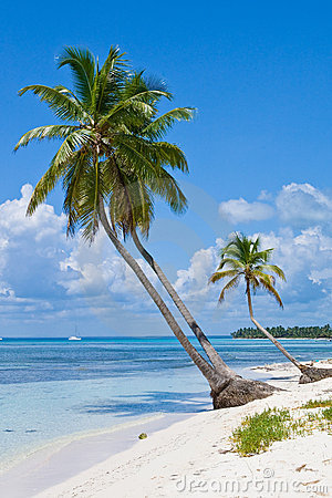 Green palms on a white sand beach