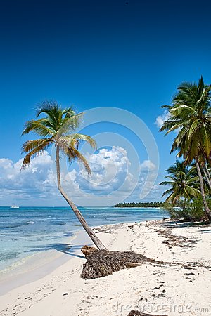 Green palms on white sand beach under blue sky