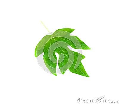 Green papaya leave