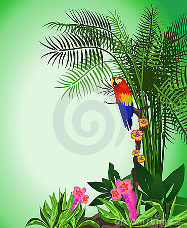Green Parrot Background