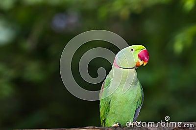 Green Parrot Bird
