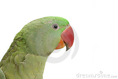Green parrot profile