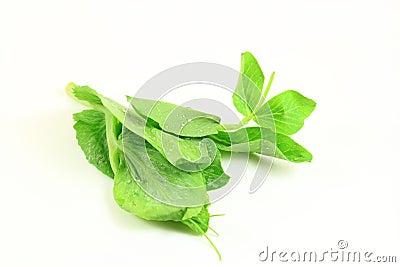 Green Pea Shoot