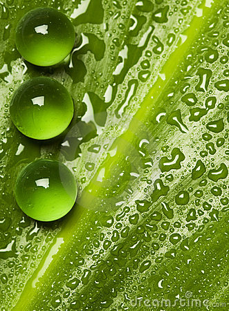 Green pearls on wet leaf