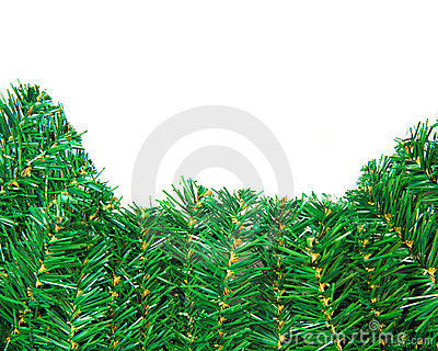 Green pine branch close-up for christmas