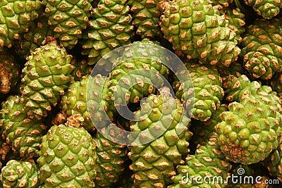 Green pine cones
