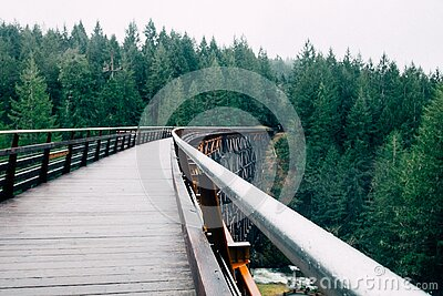 Green Pine Trees Next To A Wooden Bridge Free Public Domain Cc0 Image