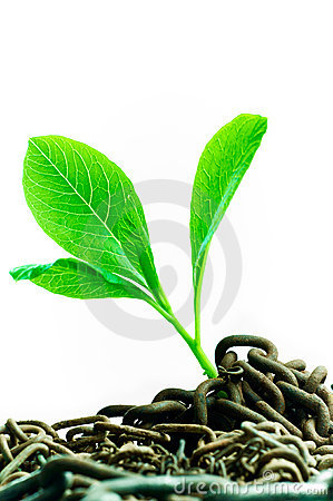 Free Green Plant Royalty Free Stock Photo - 19598865