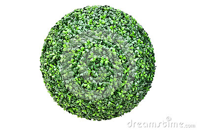 Green plant ball isolated on white
