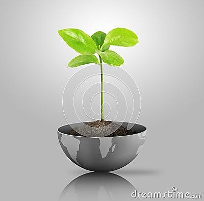 Green plant on globe