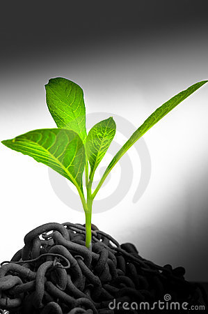 Free Green Plant Growing Royalty Free Stock Image - 19598856