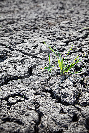 Free Green Plant Growing From Cracked Earth Stock Photo - 19514360