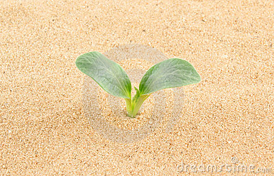 Green plant growing through sand