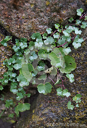 Green plant growing on stone