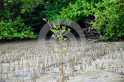 Green plant growing trough sand
