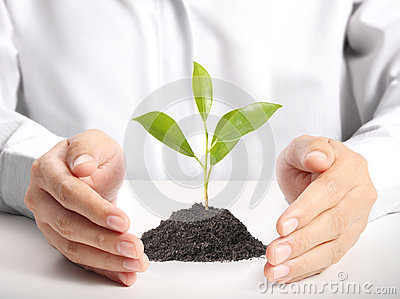 Green plant in hand