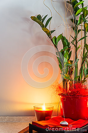 Free Green Plant In A Pot With Candlelight Royalty Free Stock Photo - 30240225
