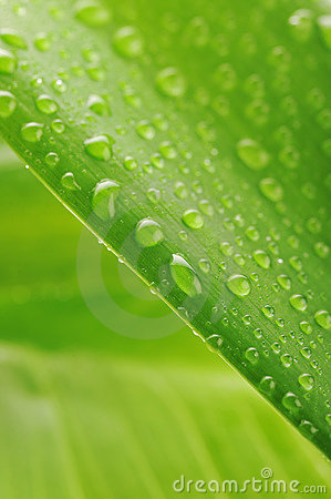 Green plant leaf with water drops