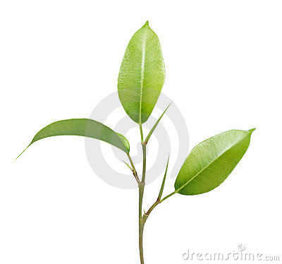 Green plant leaves and stem