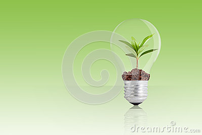 Green plant in light bulb