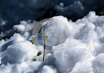 Green plant in the snow
