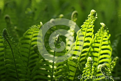 Green plant in spring day