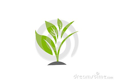 Green Plant vector illustration template Vector Illustration