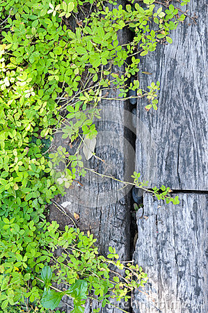 Green plant on wood