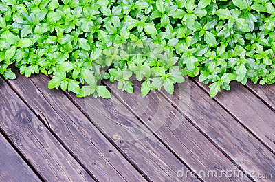 Green plant on wood floor