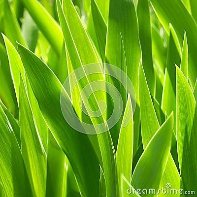 Green plants.