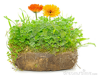 Green Plants and Calendula Flowers in Soil