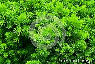Green prickly bush