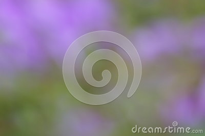 Green Purple Summer Background - Blur Stock Photos Stock Photo
