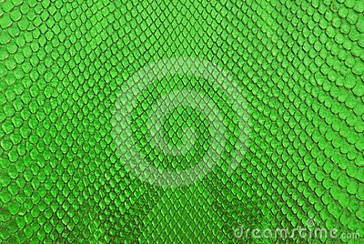 Green python snack skin texture background.
