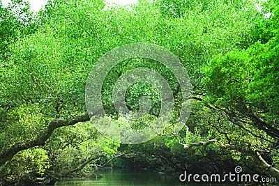 Green rain forest