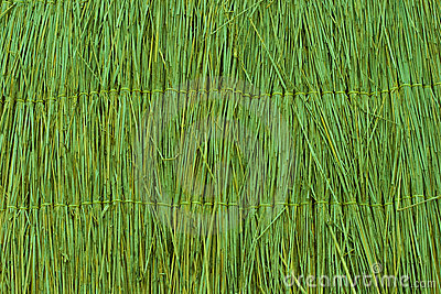 Green reed texture wallpaper or background