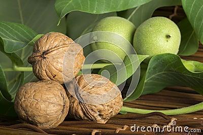 Green and ripe walnuts. Studio shot