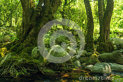 Green rocky forest