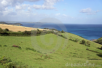 Green rolling hills, blue sea and cows