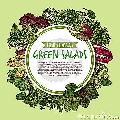 Free Green Salad Sketch Poster Of Fresh Leaf Vegetable Royalty Free Stock Images - 116682509