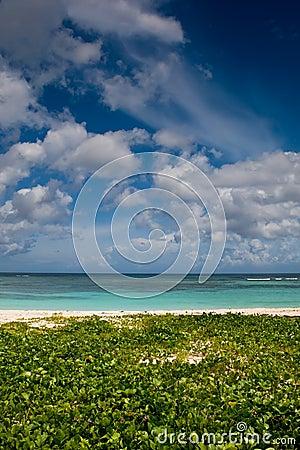 Green sand beach near blue ocean
