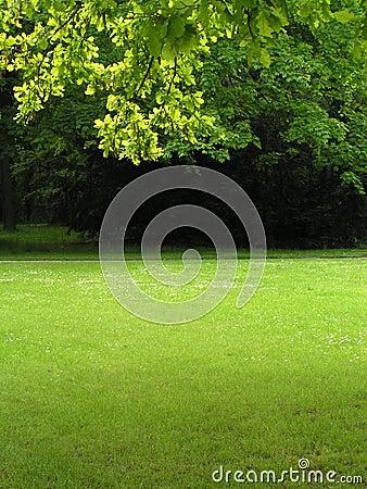 Green scenery 2