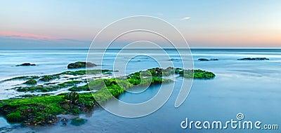 Green sea algae