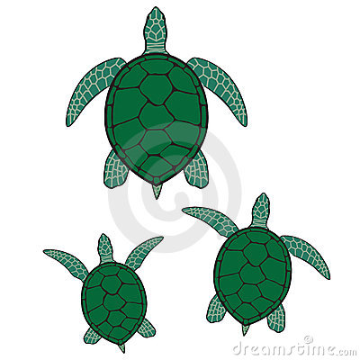 Green sea turtle illustration