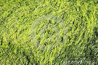 Green seaweed background