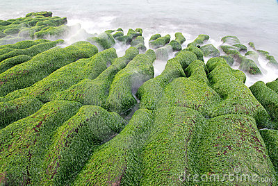 Green seaweed coastline.