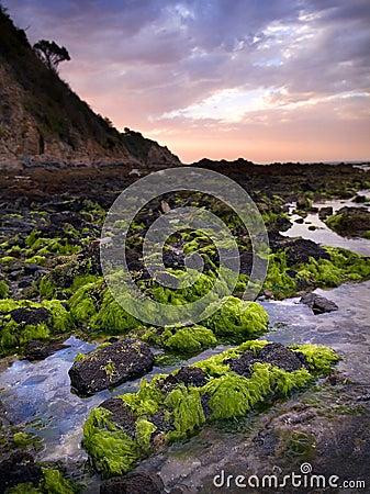 Green Seaweed on Rocks