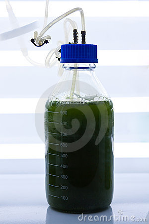 Green seaweed in test bottle
