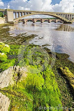 Green seaweed under bridges